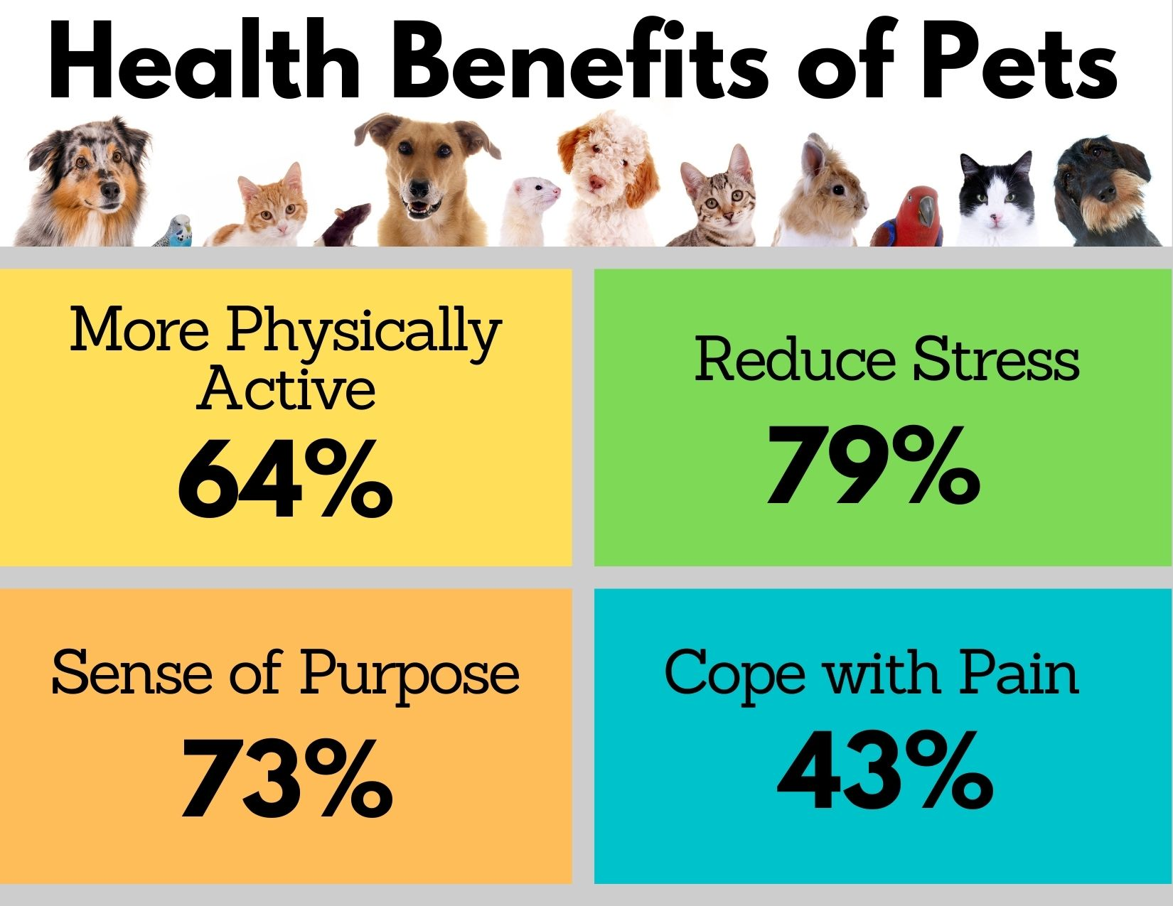 Infographic showing the health benefits of Seniors owning pets